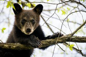 Black Bear Cub II by Beth Wold