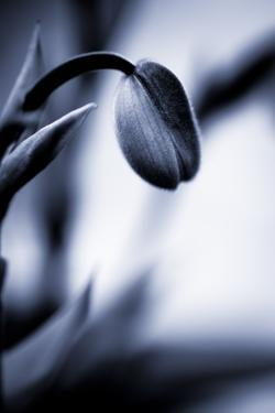 Blue Orchid I by Beth Wold