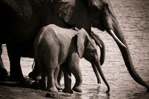 Drinking Elephants by Beth Wold