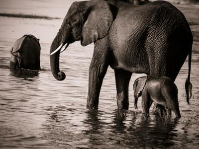 Elephant & Baby by Beth Wold