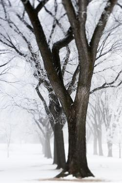 Frosted Trees II by Beth Wold