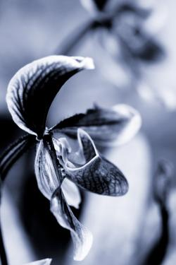 Orchid IV by Beth Wold