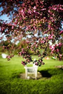 Spring Bench II by Beth Wold
