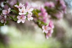 Spring Blossoms III by Beth Wold