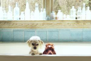 Bath Tub Buddies by Betsy Cameron