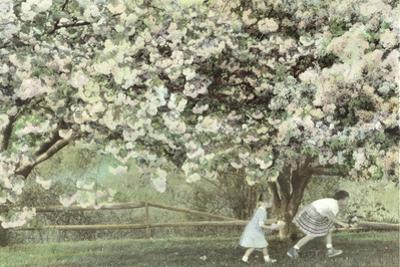 Under the Apple Blossom Tree by Betsy Cameron