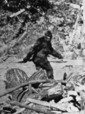 Alleged Photo of Bigfoot by Bettmann