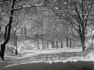 Central Park in Winter by Bettmann