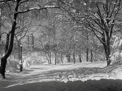 Central Park in Winter by Bettmann