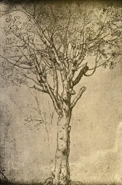 Drawing a Tree by Leonardo da Vinci by Bettmann