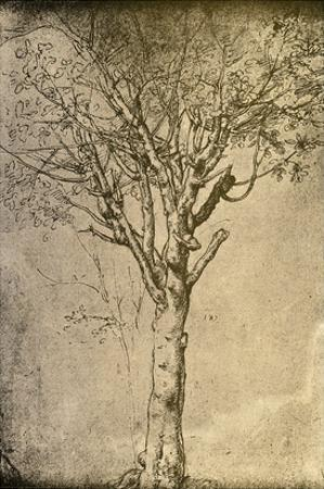 Drawing a Tree by Leonardo da Vinci