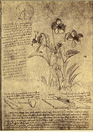 Drawing of Flowers and Diagrams by Leonardo da Vinci