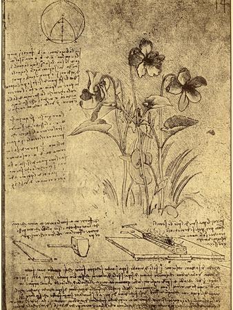 Drawing of Flowers and Diagrams by Leonardo da Vinci