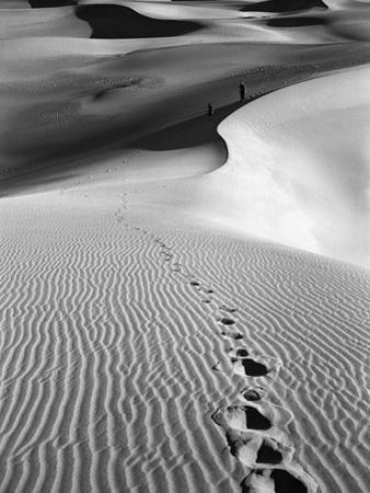 Footprints on Desert Dunes