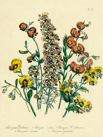 Illustration of Colorful Flowers by Bettmann