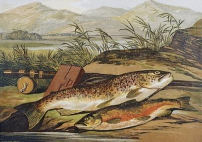 Illustration of Fishing Tackle with a Trout and a Charr by Bettmann