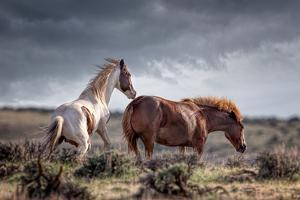 Horses by Betty Wiley