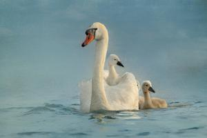 Swan Family by Betty Wiley
