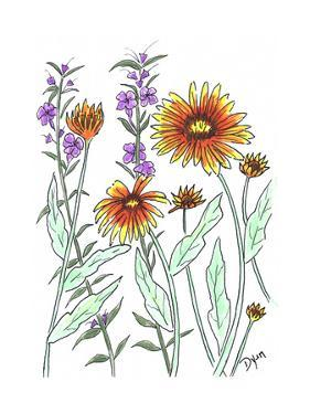 Common Blanket Flower by Beverly Dyer