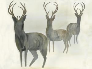 Deer Trio by Beverly Dyer