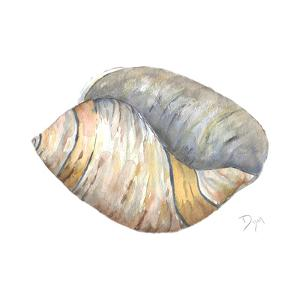 Sea Shell Neutral 1 by Beverly Dyer