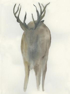 Solo Deer by Beverly Dyer