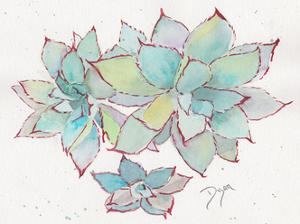 Succulent ll by Beverly Dyer