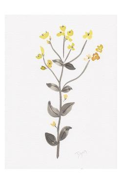 Wildflower Organics V by Beverly Dyer