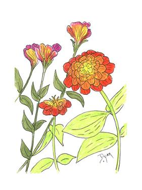 Zinnia by Beverly Dyer