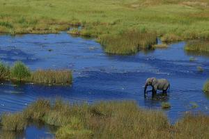Aerial of an African Elephant, Loxodonta Africana, Standing in a Channel of Water by Beverly Joubert