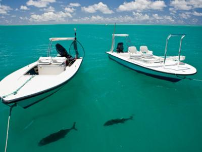 Two Tropical Fish Swimming Just under the Water Near Anchored Boats by Beverly Joubert