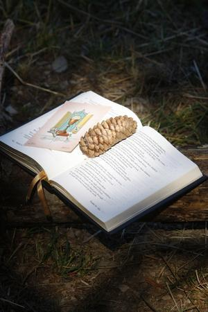 https://imgc.allpostersimages.com/img/posters/bible-with-pine-cone-haute-savoie-france_u-L-Q1GYJJU0.jpg?artPerspective=n