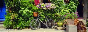 Bicycle in Front of Wall Covered with Plants and Flowers, Rochefort En Terre, France