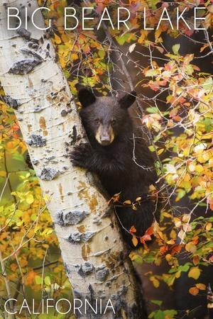 https://imgc.allpostersimages.com/img/posters/big-bear-lake-california-bear-in-birch-tree_u-L-Q1GQN4M0.jpg?p=0