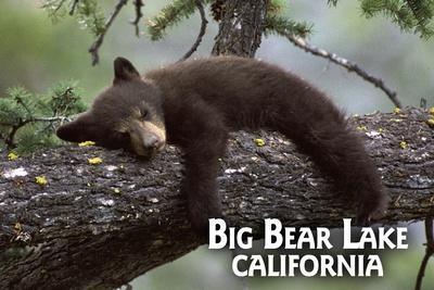 https://imgc.allpostersimages.com/img/posters/big-bear-lake-california-black-bear-in-tree_u-L-Q1GQN4E0.jpg?p=0