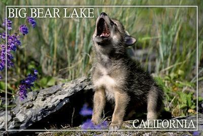 https://imgc.allpostersimages.com/img/posters/big-bear-lake-california-wolf-pup-howling_u-L-Q1GQN4V0.jpg?p=0