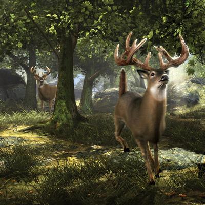 https://imgc.allpostersimages.com/img/posters/big-buck-whitetail-deer_u-L-PW49T80.jpg?p=0