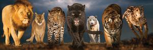 Big Cats Educational Poster