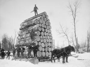 Big Load of Logs on a Horse Drawn Sled in Michigan, Ca. 1899