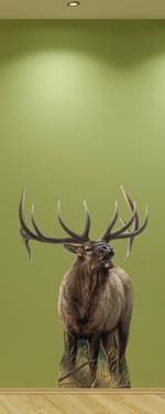 Big Rack Elk