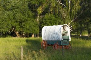 Bozeman, Montana, Sheep and Stagecoach in Beautiful Green Fields by Bill Bachmann