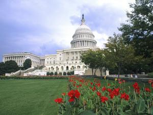 Capitol Building and Colorful Flowers, Washington DC, USA by Bill Bachmann