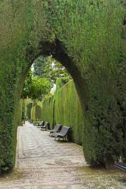 Granada, Spain, Alhambra, Famous Hedges of Gardens of the Generalife by Bill Bachmann