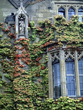 Halls of Ivy, Oxford University, England by Bill Bachmann