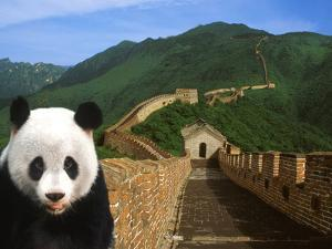 Panda and Great Wall of China by Bill Bachmann