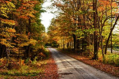 USA, Maine, Bethel. Wood Trail with Fall Foliage by Bill Bachmann