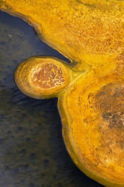 Mineral deposits from hotsprings, Upper Geyser Basin, Yellowstone , Wyoming by Bill Coster