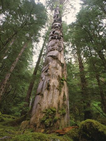 A Large Totem Pole Stands Amid Tall Trees in a Mossy Forest by Bill Curtsinger