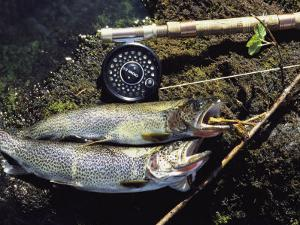 A Pair of Cutthroat Trout, Salmo Clarki, and a Reel Lie on a Bank by Bill Curtsinger