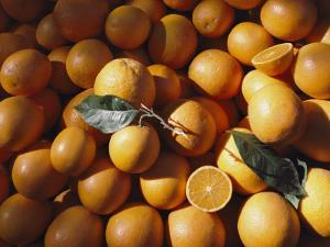 An Abundance of Oranges by Bill Curtsinger